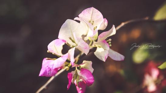 Flowers-1-10