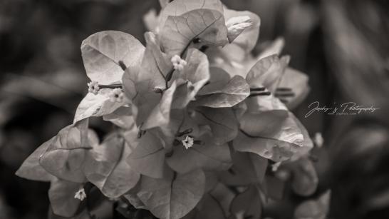 Flowers-1-11