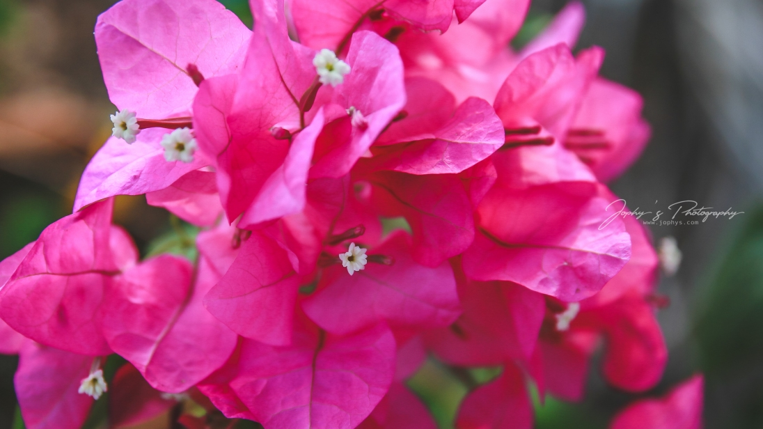 Flowers-1-12