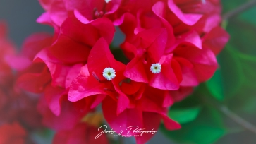 Flowers-1-2