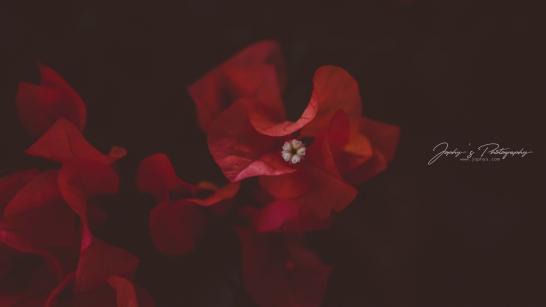 Flowers-1-7