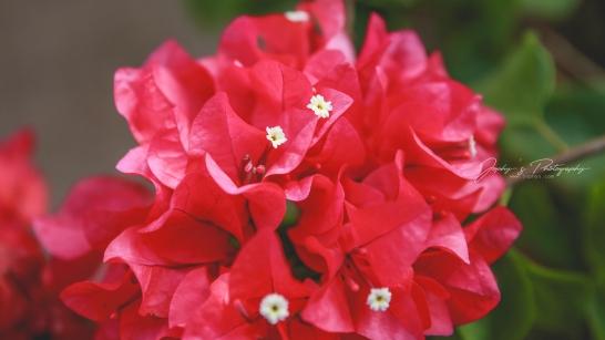Flowers-1-9