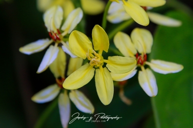 Garden Flowers -1-2